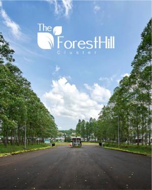 Asset 1forest